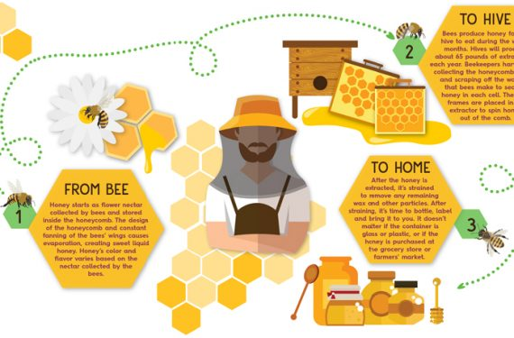 From bee to beekeeper – how is honey made?