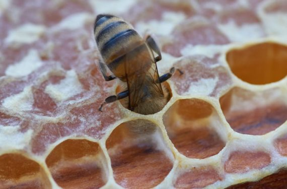 A guide to organic honey in Australia